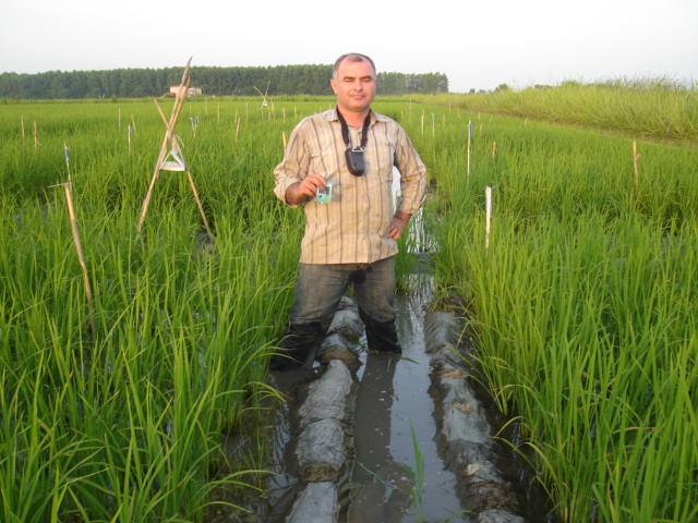 Effect of organic and chemical fertilizer(N-P-K) application  on growth index of  rice