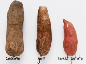 yam-vs-sweet-potato